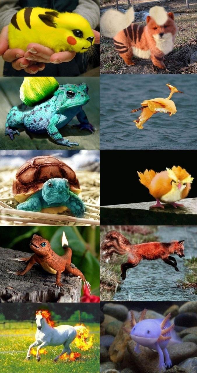real pokemon creatures